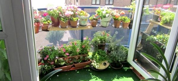 Planter un petit jardin sur son balcon starofservice - Que planter sur son balcon ...