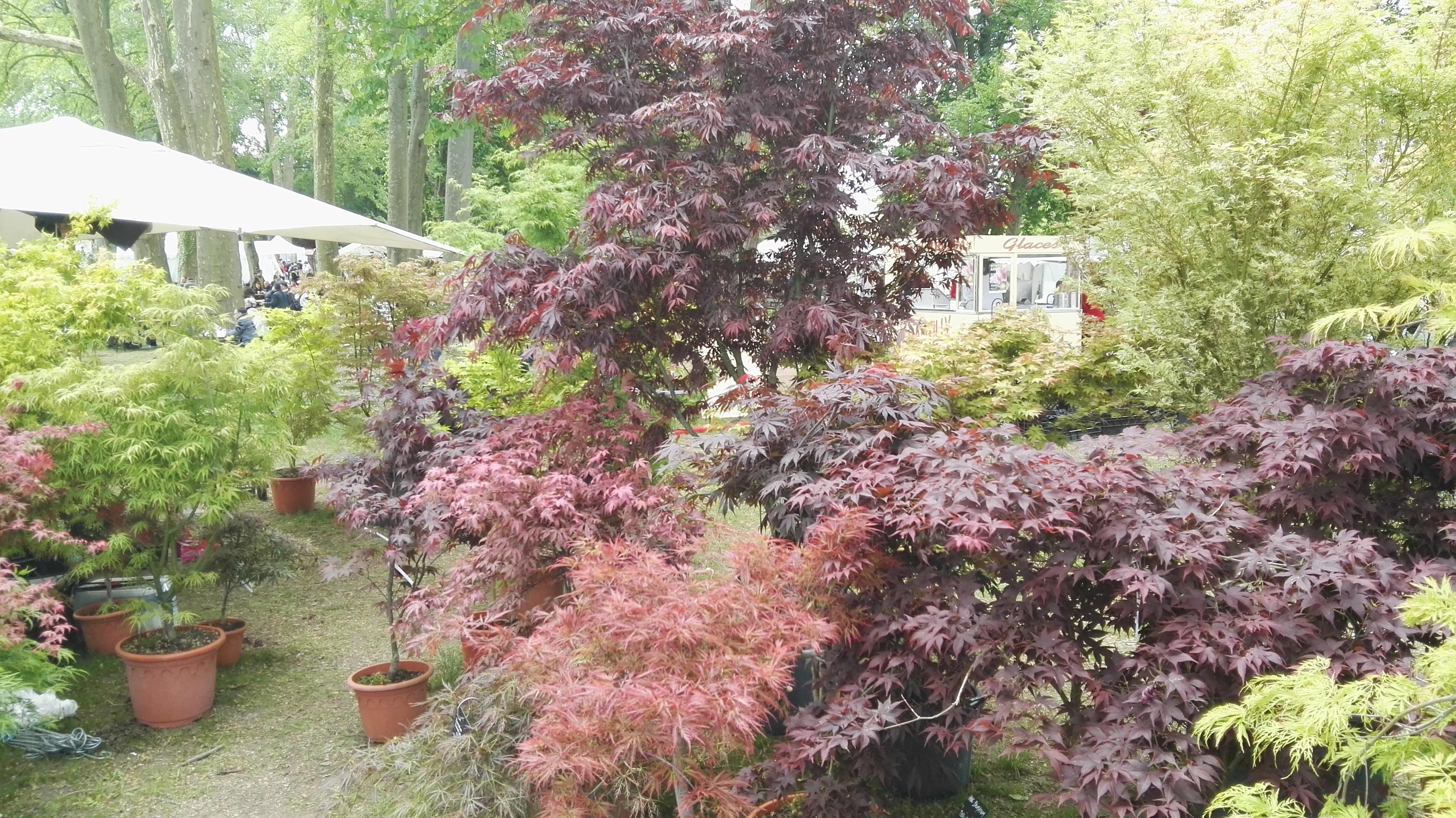 S bastien dipl m en horticulture am nagement paysager for Creation jardin potager